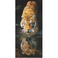 Tigre du Bengale se désaltérant, carte postale photo