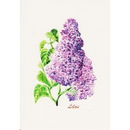 Cartes Aquarelles Fleurs : Lilas mauve
