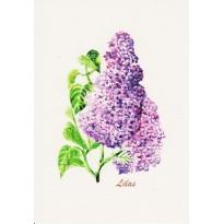 Fleurs de Lilas mauve : carte postale aquarelle