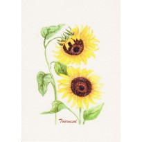 Tournesol, carte postale aquarelle
