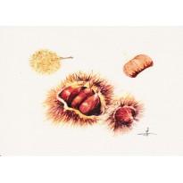 Châtaignes, carte postale aquarelle