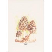 Morilles, carte postale aquarelle
