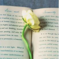 """Love and Serenity"" : carte romantique et fleurie."