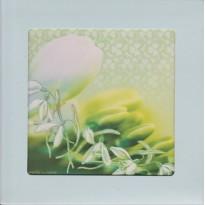 Fleurs de Perce Neige, carte cadre