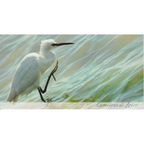 Aigrette garzette, cate postale photo