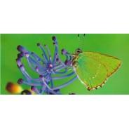 Carte postale photo Papillon et Fleur bleu