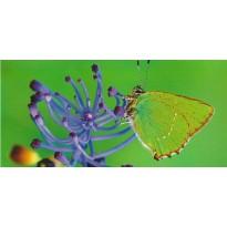 """Carte postale photo """"Papillon et Agapanthe"""""""