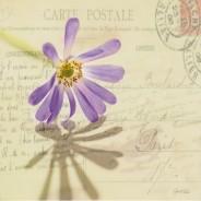 """Carte postale """"Fleur bleue"""""""