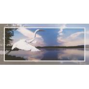 LeHéron prend son envol au bord de l'eau sur carte postale.