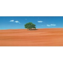 Arbre dans un champ, carte postale photo