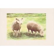 Moutons et brebis, carte reproduction d' aquarelle