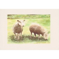 Moutons et brebis, carte reproduction d' aquarelle