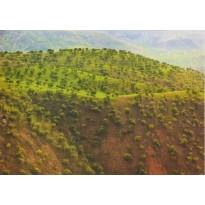 Paysages d'Iran, collection de 14 grandes cartes postales