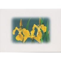 11 variétés de Fleurs présentées en cartes doubles avec enveloppes
