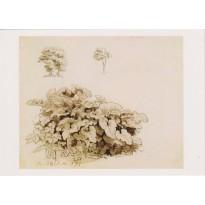 Etude de plantes par Caspar David Friedrich, carte postale d'art
