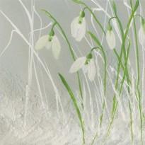 """""""Perce-neige"""", carte de voeux reproduction d'aquarelle"""