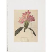 Grandes cartes de Fleurs pour encadrements
