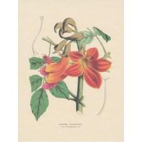 Jeu de 2 cartes d'art Planches botaniques