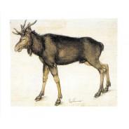 Elan de Albrecht Dürer, carte postale
